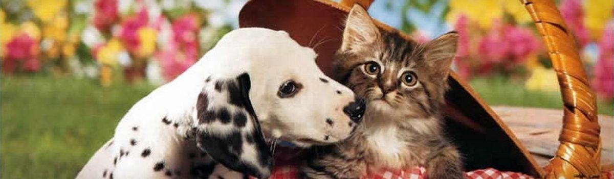 PAWSitive PetSitting